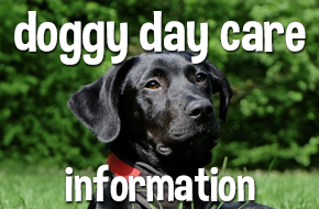 doggy day care information scoobys doggy day care Northampton